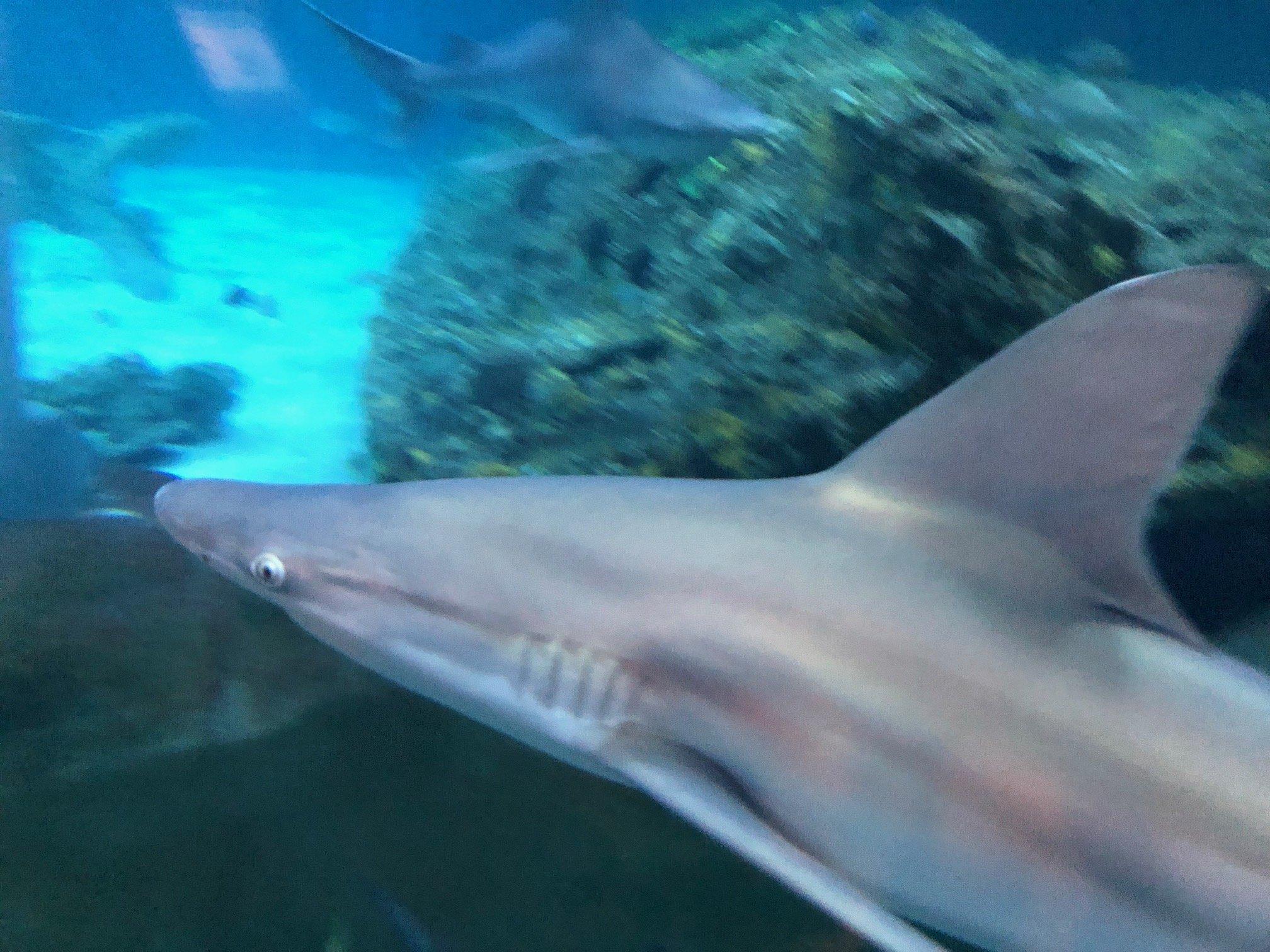 ocean isle shark attack 2020